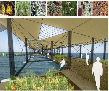 en la parte inferior se propone un jardin de plantas acuaticas autóctonas